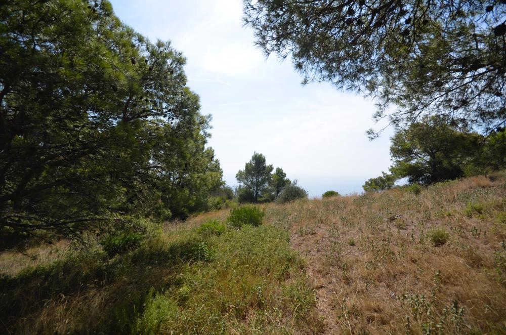 915 Les Magnolies V Terreny Begur Begur