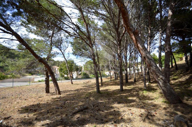 961 Terra i pins Terreny Sa Tuna Begur
